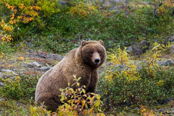 https://i0.wp.com/www.northshoredailypost.com/wp-content/uploads/2019/07/grizzly-bear-861962_1280.jpg?fit=600%2C400&ssl=1