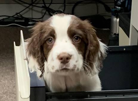 https://i0.wp.com/www.northshoredailypost.com/wp-content/uploads/2019/11/Finn-VCH-dog.jpg?fit=463%2C338&ssl=1