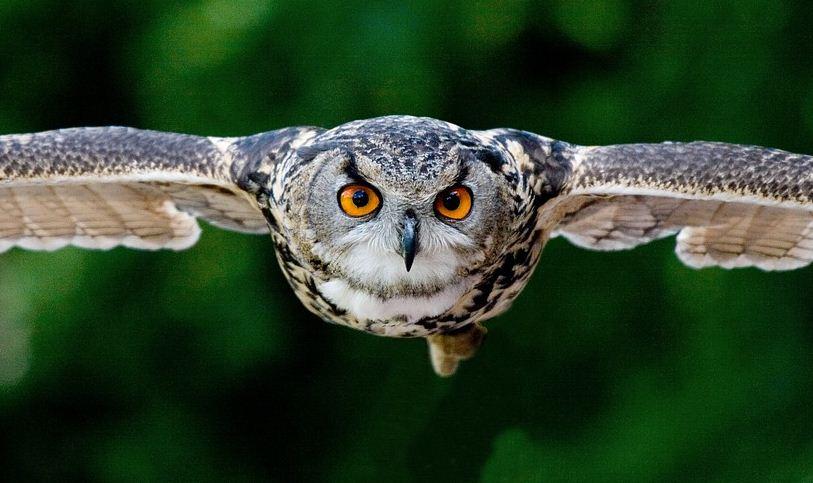 https://i0.wp.com/www.northshoredailypost.com/wp-content/uploads/2019/11/Owl.jpg?fit=813%2C483&ssl=1