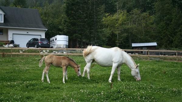 https://i0.wp.com/www.northshoredailypost.com/wp-content/uploads/2019/12/Mia-and-foal.jpg?fit=600%2C337&ssl=1