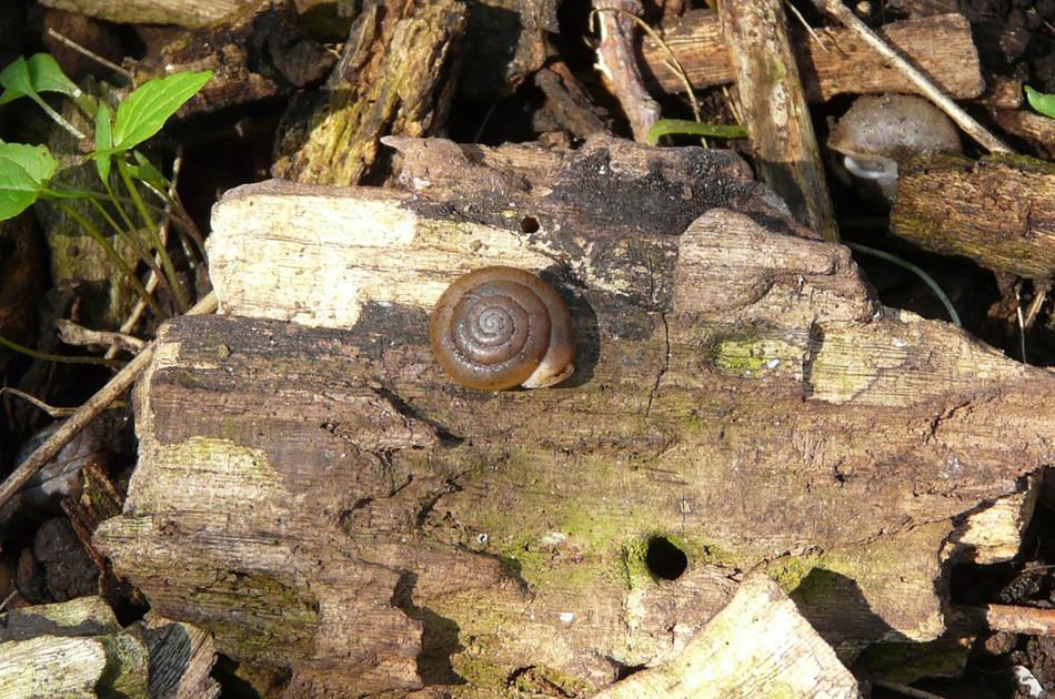 https://i0.wp.com/www.northshoredailypost.com/wp-content/uploads/2019/12/snail.jpg?fit=950%2C630&ssl=1
