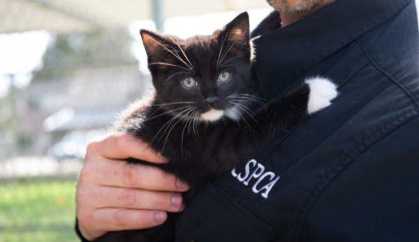 https://i0.wp.com/www.northshoredailypost.com/wp-content/uploads/2020/05/SPCA-cats.jpg?fit=600%2C347&ssl=1