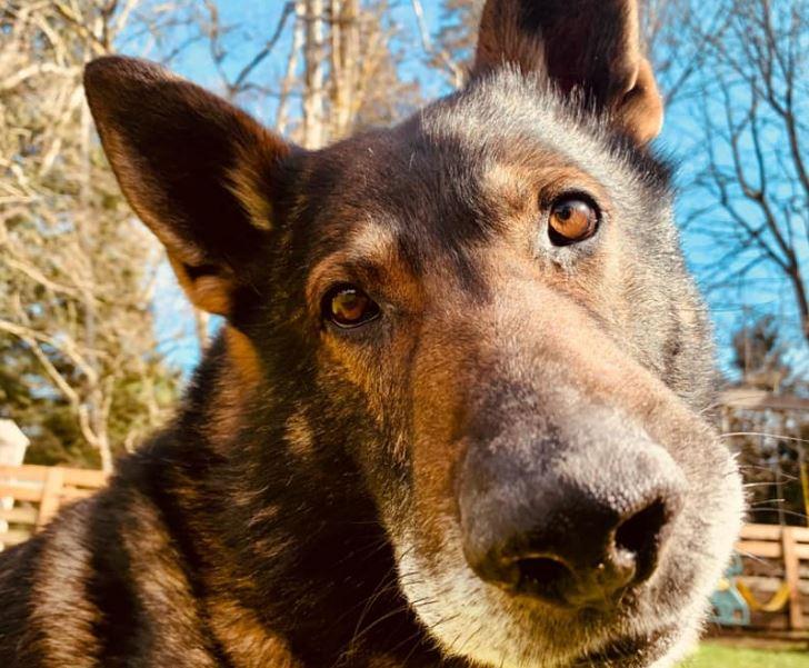 https://i0.wp.com/www.northshoredailypost.com/wp-content/uploads/2021/03/police-dog.jpg?fit=728%2C601&ssl=1