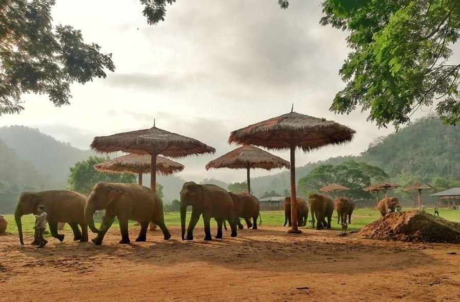 https://i0.wp.com/www.northshoredailypost.com/wp-content/uploads/2021/05/Elephant-Nature-Park.jpg?fit=897%2C589&ssl=1