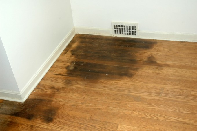 Cleaning Hardwood Floors Remove Urine