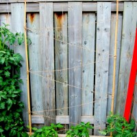 How to make a bean trellis for under $5