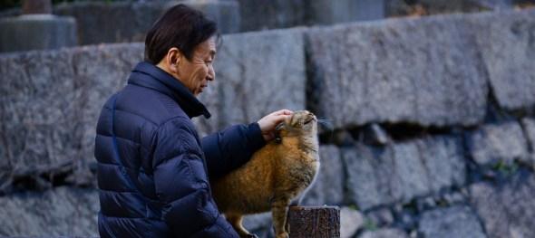 cat_elder_1524184336.jpg