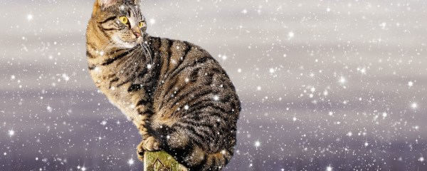 Feral Cats Deserve Warmth This Winter