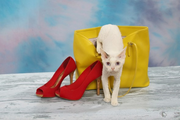 Cat, Shoes