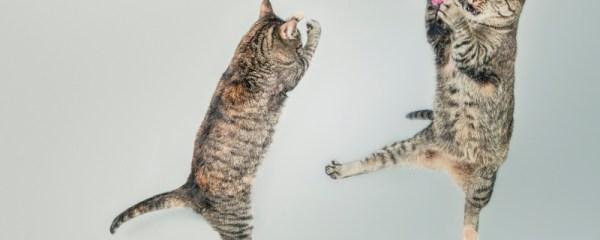The ABCs of Cat Behavior