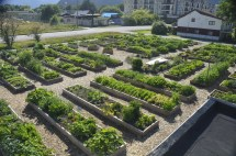 Community Garden Design Ideas