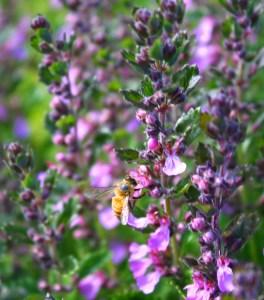 2010.07.03_Purple Flowers