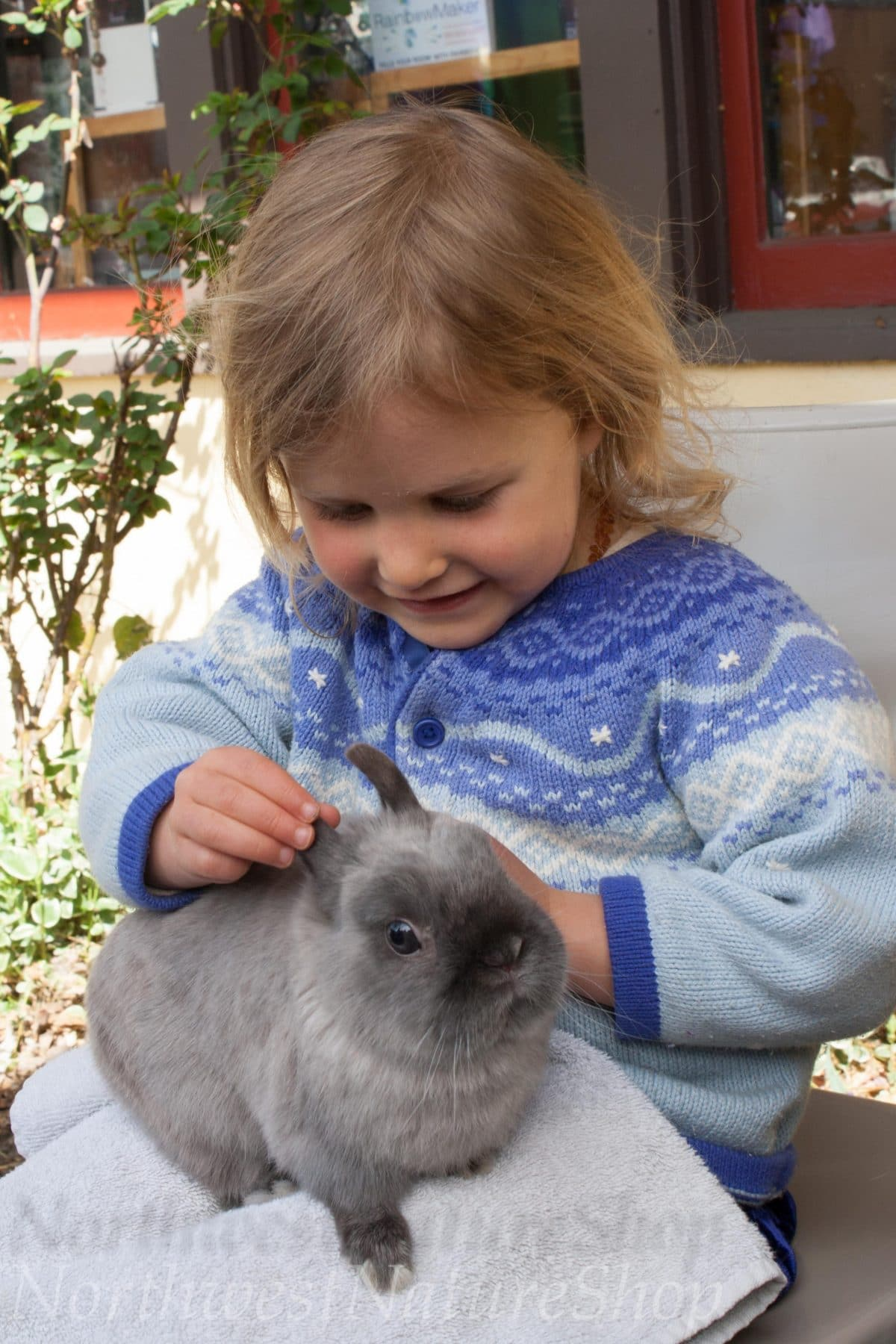 Rabbits Are Coming To Northwest Nature Shop