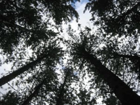 Tree-before