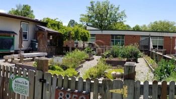 Adopt-A-Week in the Garden   Summer 2020