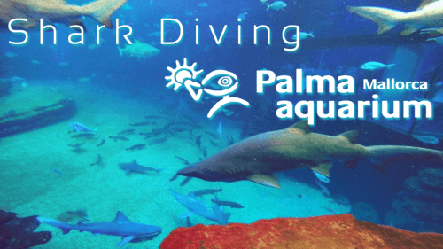 Shark-Diving-Palma-Aquarium.fw