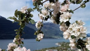 HARDANGER: It may be temperatures of 20s in the Western Norwegian fjords, in the Southern and Eastern this weekend. Photo: Jan Dahl / Scanpix