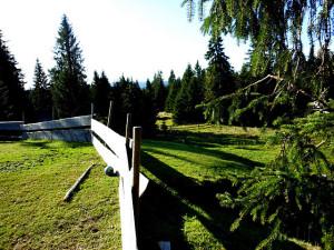 A view from Løvlia into Krokskogen. (Photo: JES)