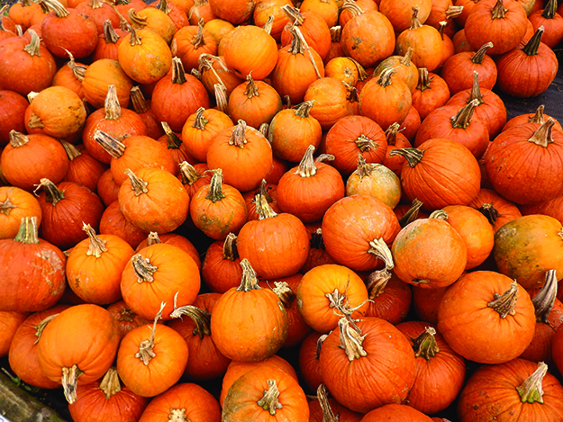Photo: Pixabay Pumpkins aren't used for food as much as they used to be.