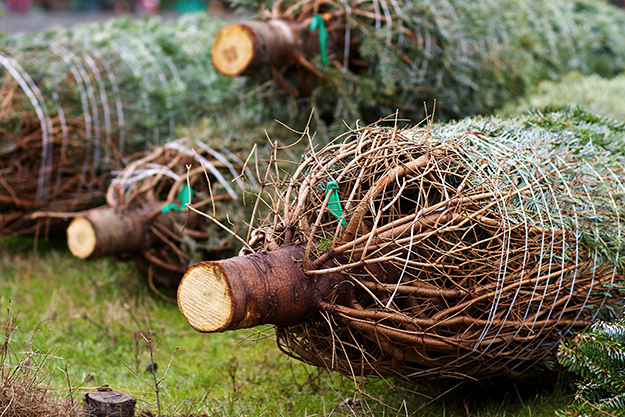 Photo: Pixabay Family Christmas tree farms like Heidi's offer more than just a tree.