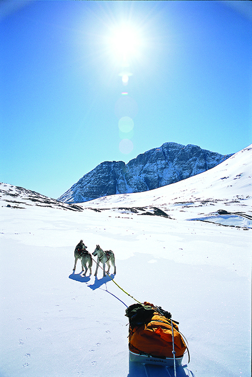 Photo: Anders Gjengedal / Visitnorway.com The snowy season typically lasts from November to May. These dogs enjoy a sunny Easter up in the mountains.