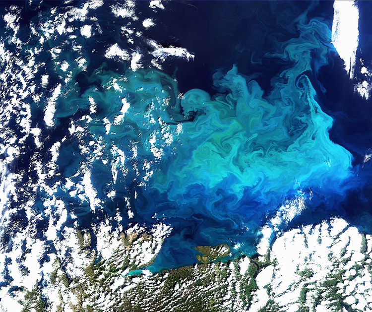 Photo: © European Space Agency (ESA) Satellite image of algae bloom in Barents Sea.