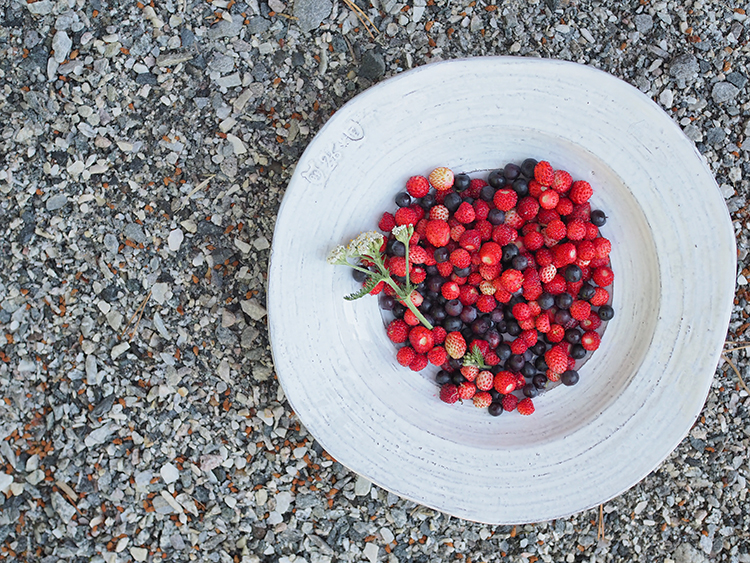 Photo: Nevada Berg Berries are in beautiful abundance in Norway this time of year.