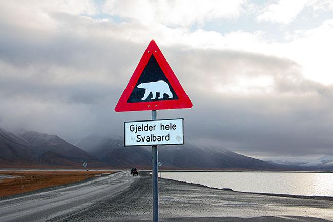 Longyearbyen - polar bears