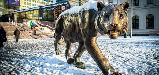 Oslo tiger