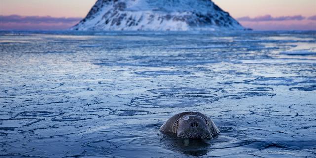 Polar tales