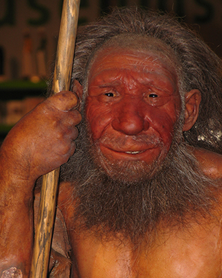a model of a man showing what Neanderthals may have looked like