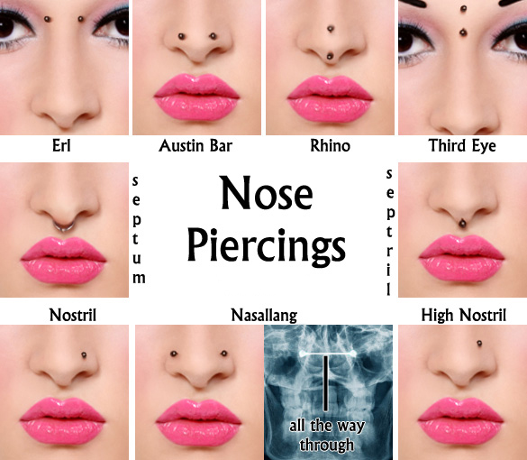 face piercing diagram and names 12n trailer plug wiring types of nose piercings - sacramento