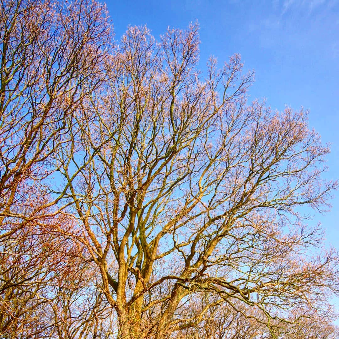 trees bluesky nature bluesky cold calm anothergreatday motiveseverywhere shapes lookforithellip