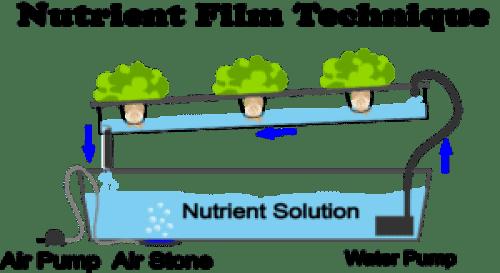 NFT Hydroponic System
