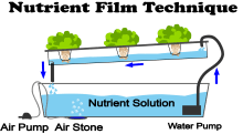What Is Nutrient Film Technique- NFT Hydroponics?