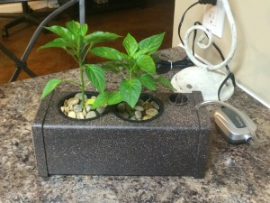 countertop hydroponic system