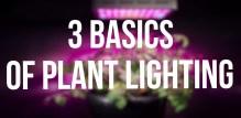 The 3 Basics of Plant Lighting