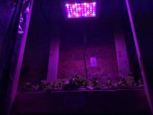 how I grew hydroponic lettuce in my garage