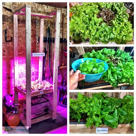 How to grow hydroponic lettuce
