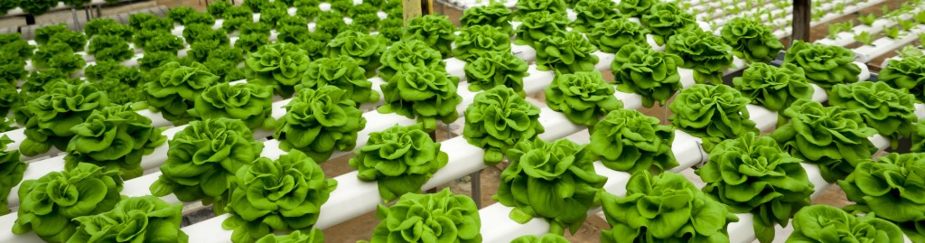 advantages of hydroponic gardening