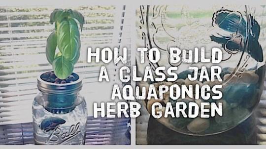 How To Build A Glass Jar Aquaponics Herb Garden