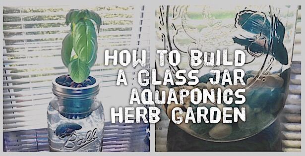 How to build a glass jar aquaponics herb garden