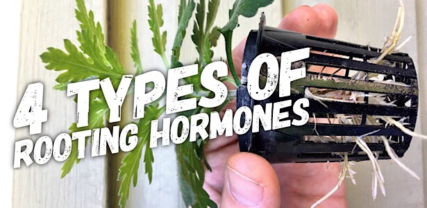 4 Different Types Of Rooting Hormone