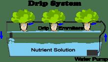 What Is Drip Hydroponics?