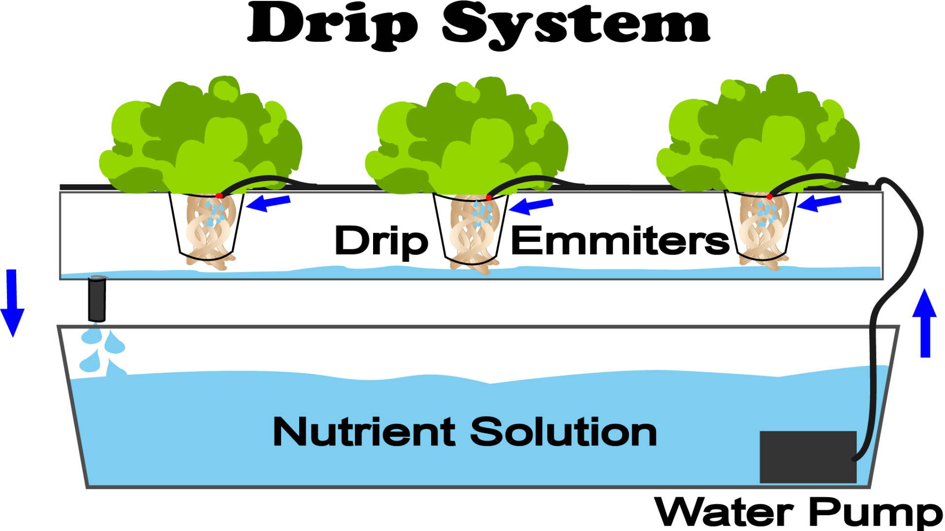 This is a diagram of a drip hydroponic system