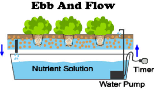 ebb and flow hydroponics system