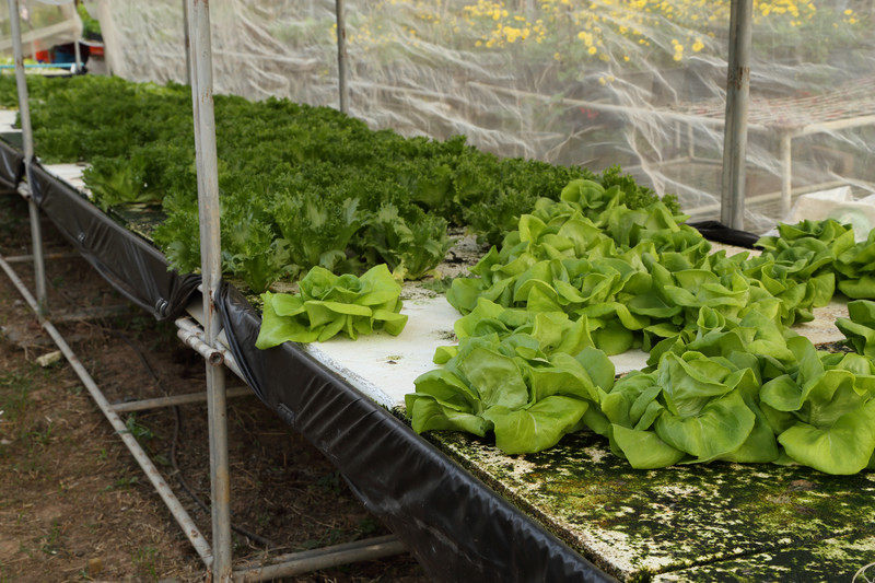 Common Issues Every Hydroponic Gardener Have