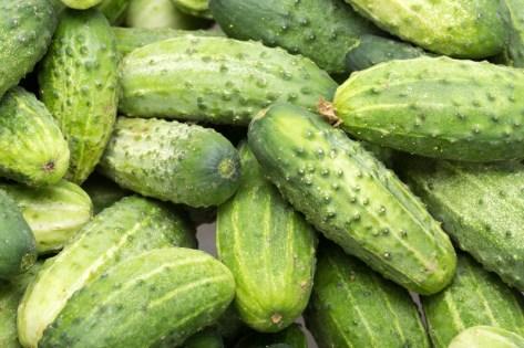 hydroponic Cucumbers