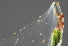 Ridding Spider Mites From Your Hydroponic Garden