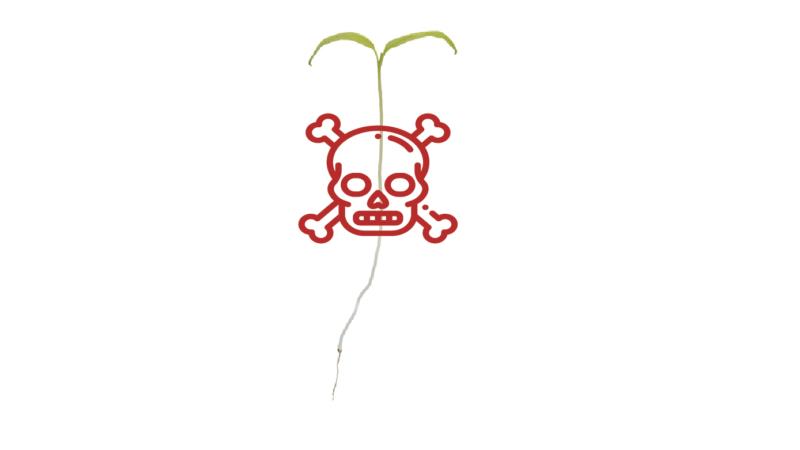 damping off kills hydroponic seedlings